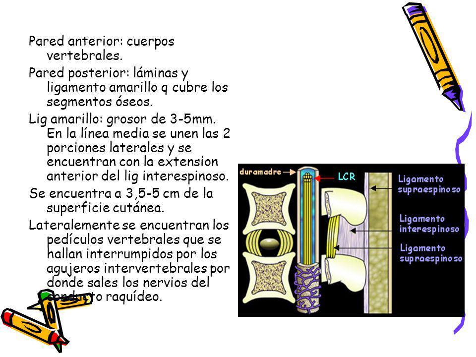 Pared anterior: cuerpos vertebrales. Pared posterior: láminas y ligamento amarillo q cubre los segmentos óseos. Lig amarillo: grosor de 3-5mm. En la l