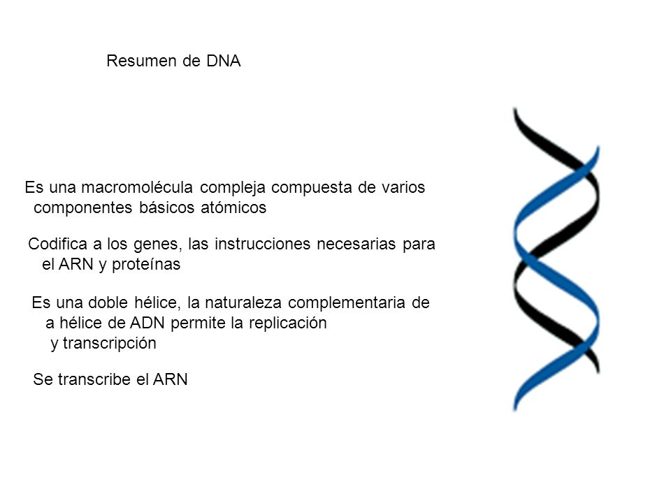 Es una macromolécula compleja compuesta de varios componentes básicos atómicos Codifica a los genes, las instrucciones necesarias para el ARN y proteí