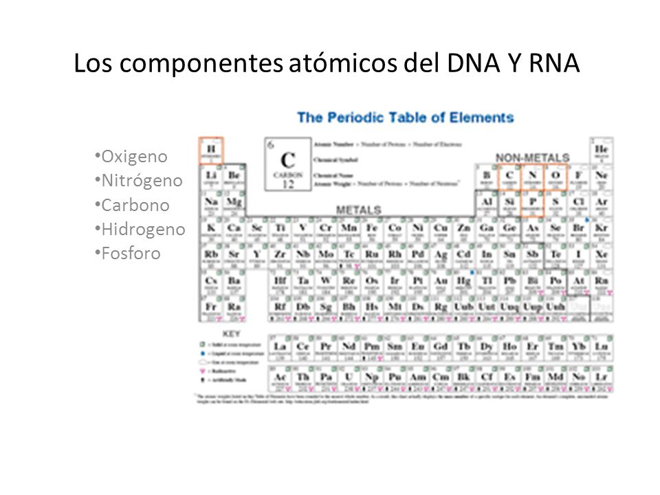 Es una macromolécula compleja compuesta de varios componentes básicos atómicos Codifica a los genes, las instrucciones necesarias para el ARN y proteínas Es una doble hélice, la naturaleza complementaria de a hélice de ADN permite la replicación y transcripción Se transcribe el ARN Resumen de DNA