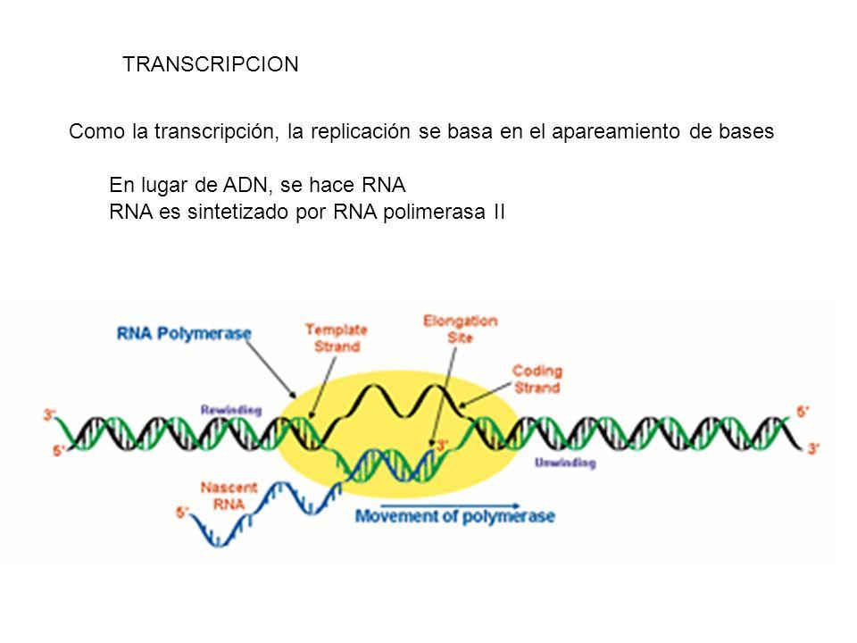 Como la transcripción, la replicación se basa en el apareamiento de bases TRANSCRIPCION En lugar de ADN, se hace RNA RNA es sintetizado por RNA polime