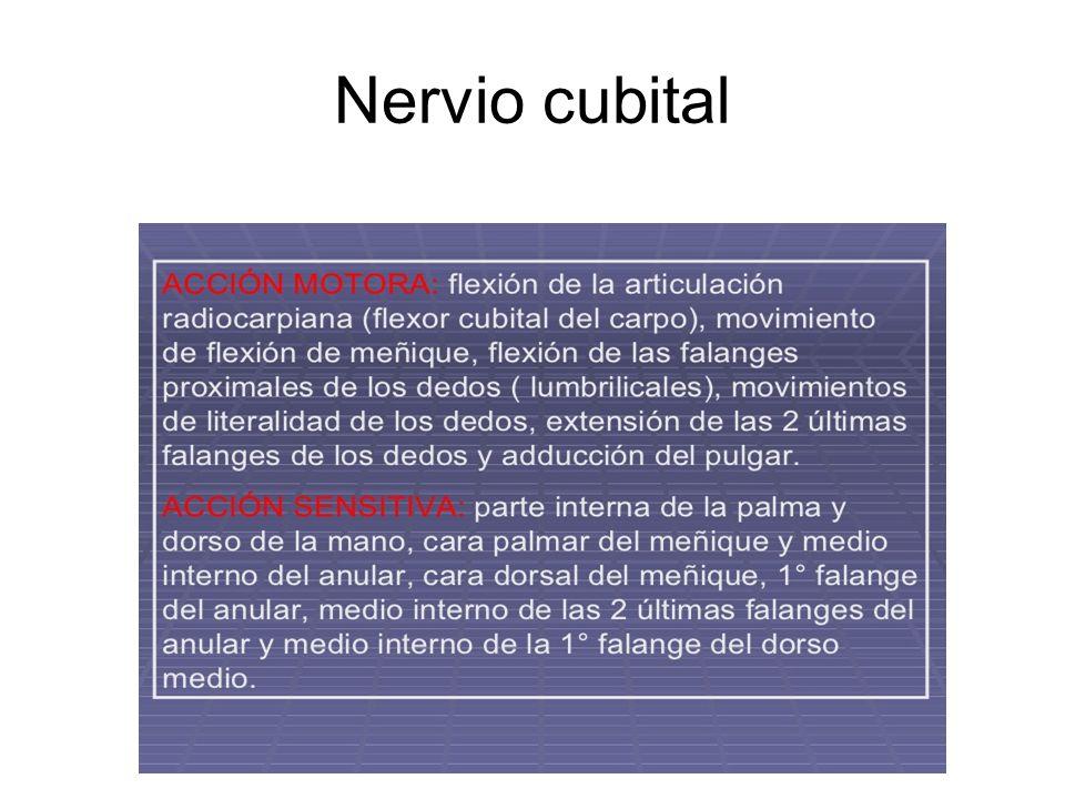 Nervio cubital