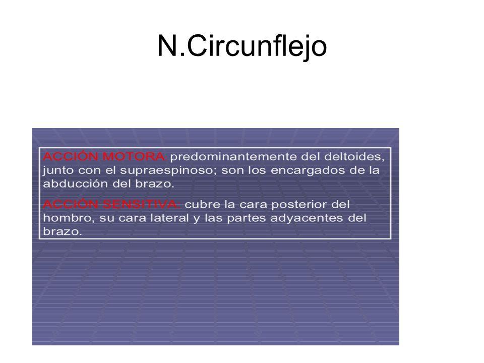 N.Circunflejo