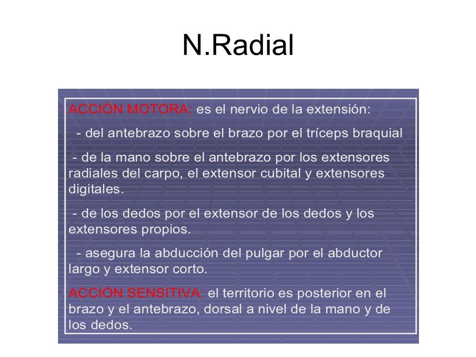 N.Radial