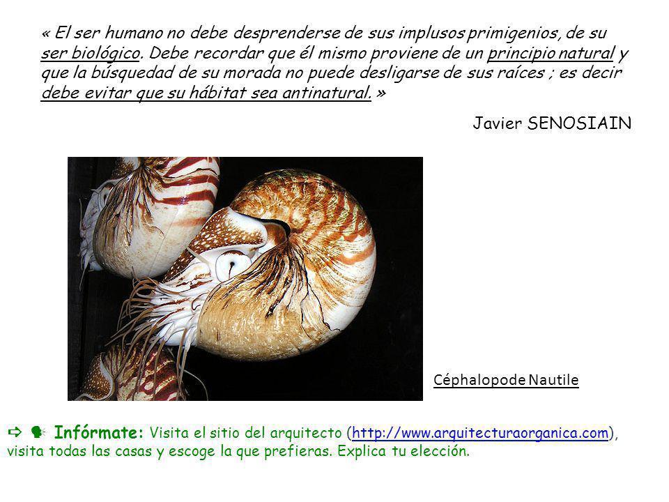 Céphalopode Nautile « El ser humano no debe desprenderse de sus implusos primigenios, de su ser biológico. Debe recordar que él mismo proviene de un p