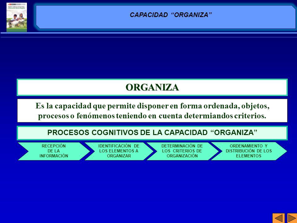 ORGANIZA Es la capacidad que permite disponer en forma ordenada, objetos, procesos o fenómenos teniendo en cuenta determiandos criterios. CAPACIDAD OR