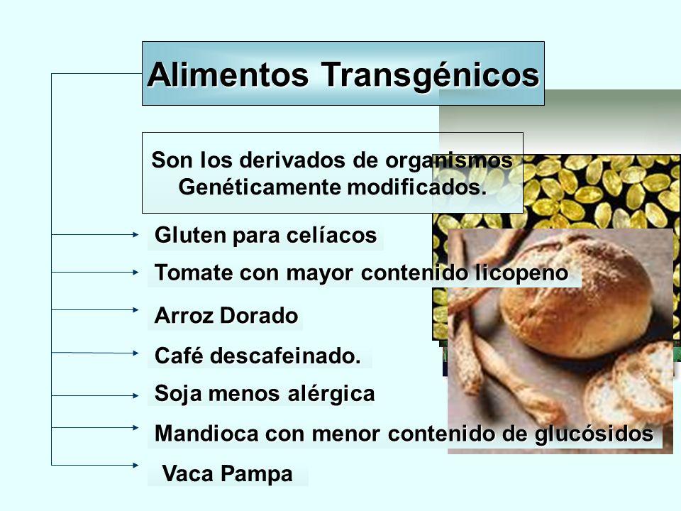 Son los derivados de organismos. Genéticamente modificados. Gluten para celíacos Tomate con mayor contenido licopeno Arroz Dorado Café descafeinado. S