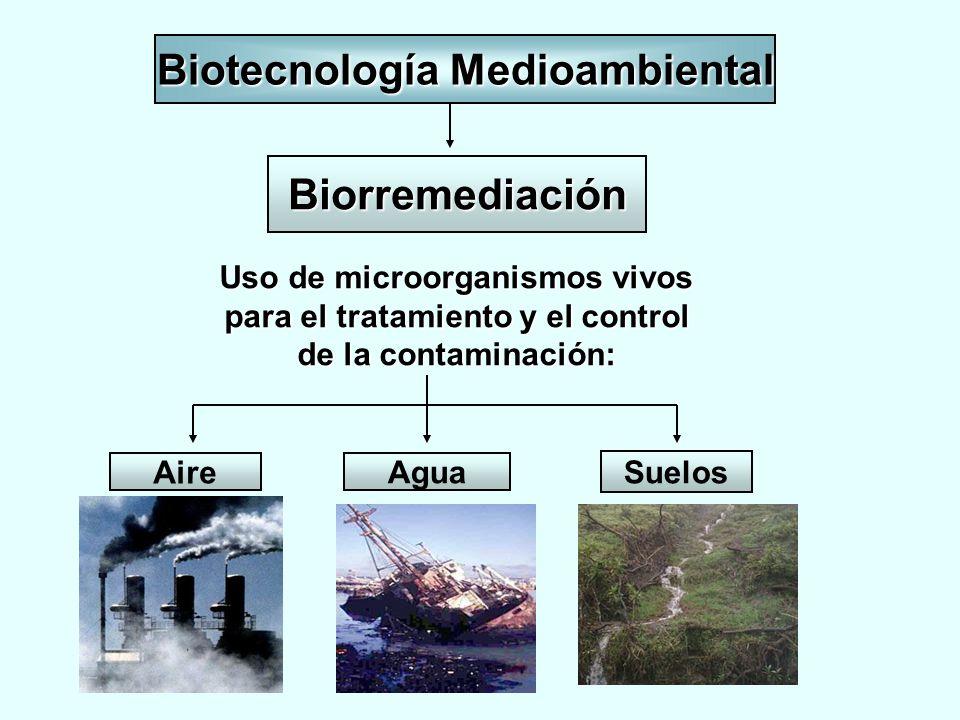 Biotecnología Medioambiental Uso de microorganismos vivos para el tratamiento y el control de la contaminación: Biorremediación Aire Agua Suelos