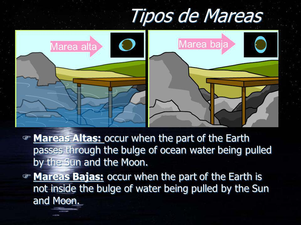 Tipos de Mareas FMareas Altas: occur when the part of the Earth passes through the bulge of ocean water being pulled by the Sun and the Moon. FMareas