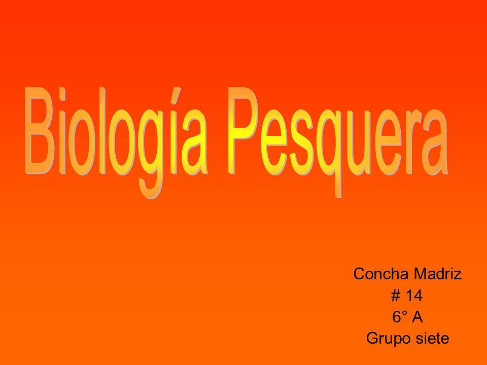 Concha Madriz # 14 6° A Grupo siete