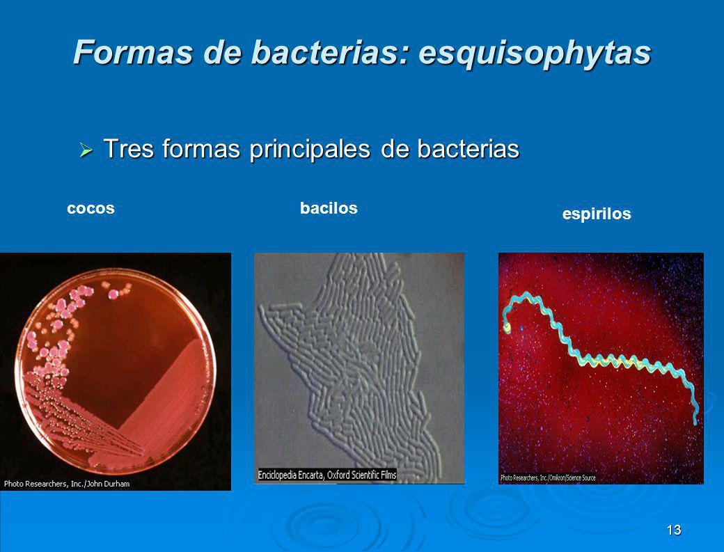 Bacterias infecciosas Bacteria del CóleraBacteria causante de la sífilis 12