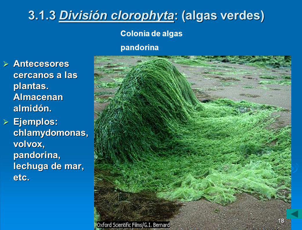 3.1.2 División crisophyta. (Algas doradas) Son unicelulares con sales de sílice impregnados en sus paredes. Son unicelulares con sales de sílice impre