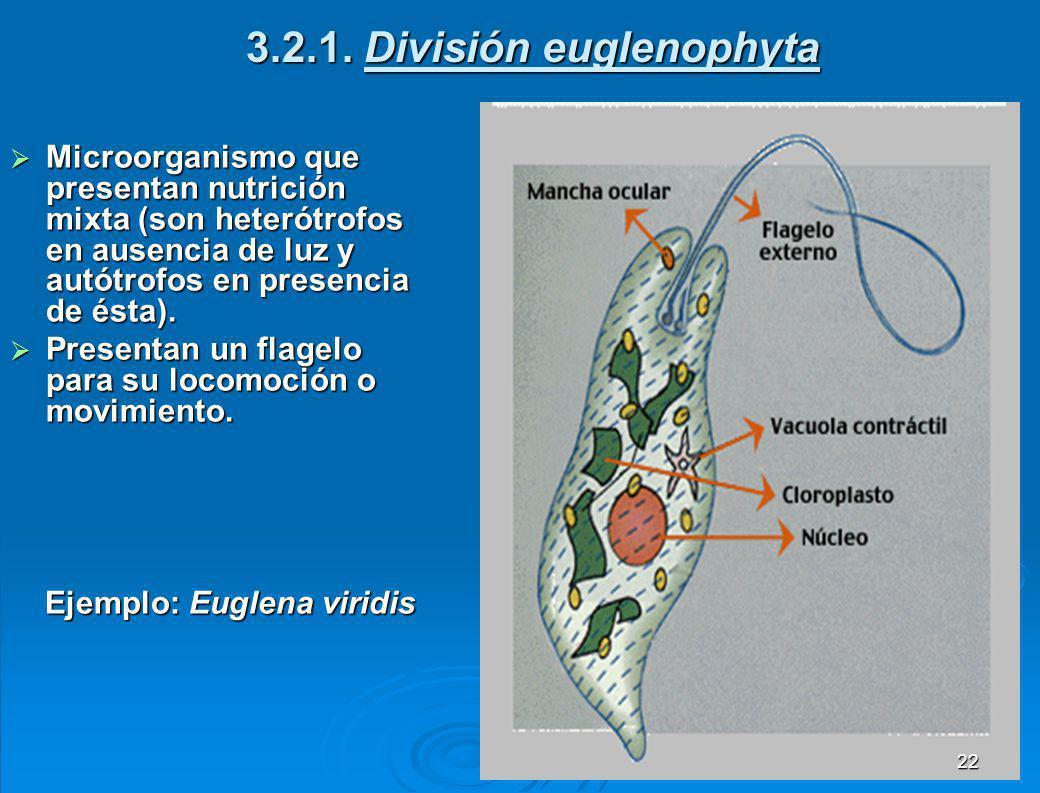3.2 Protozoarios Son microorganismos unicelulares eucarióticos.
