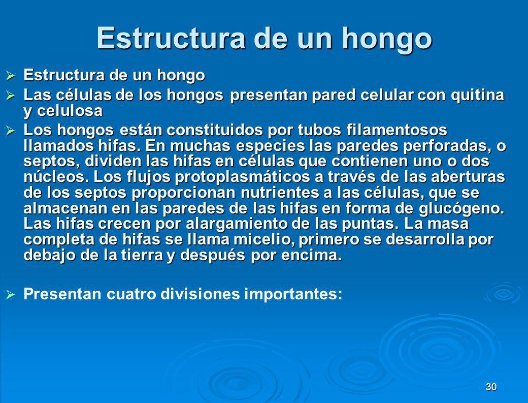 Estructura de un hongo 29