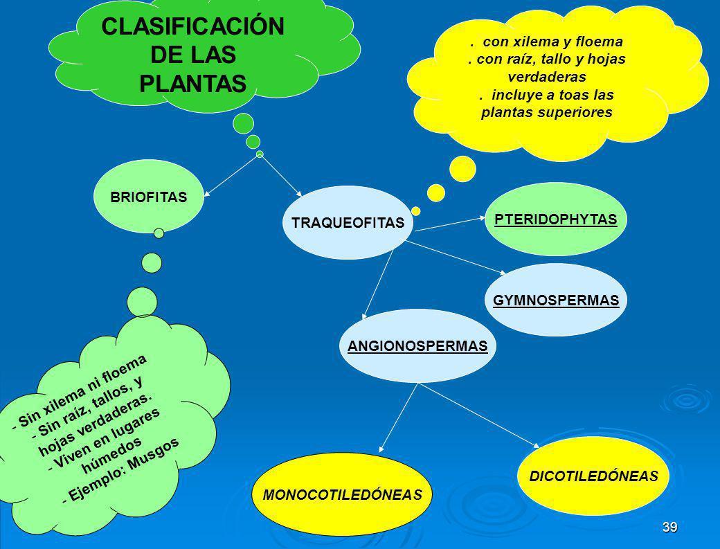 Clasificación del reino Vegetal El reino Vegetal se divide en 4 grupos o divisiones principales: La división Bryophyta engloba a hepáticas, musgos y a