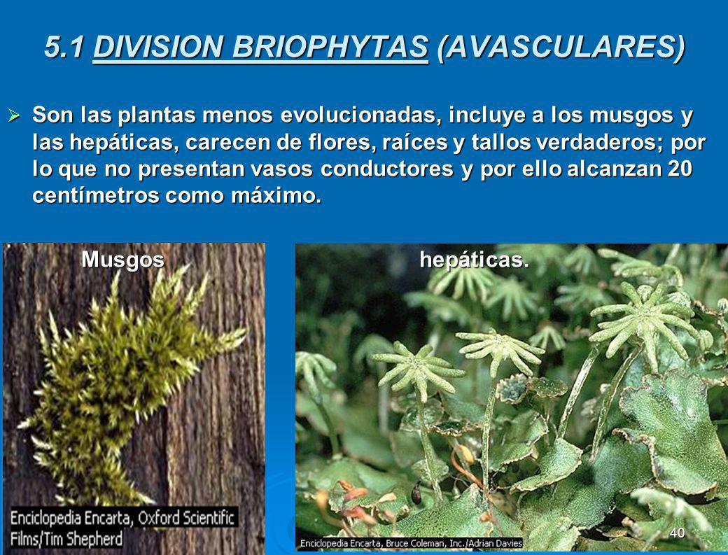 BRIOFITAS TRAQUEOFITAS GYMNOSPERMAS ANGIONOSPERMAS MONOCOTILEDÓNEAS DICOTILEDÓNEAS CLASIFICACIÓN DE LAS PLANTAS. con xilema y floema. con raíz, tallo
