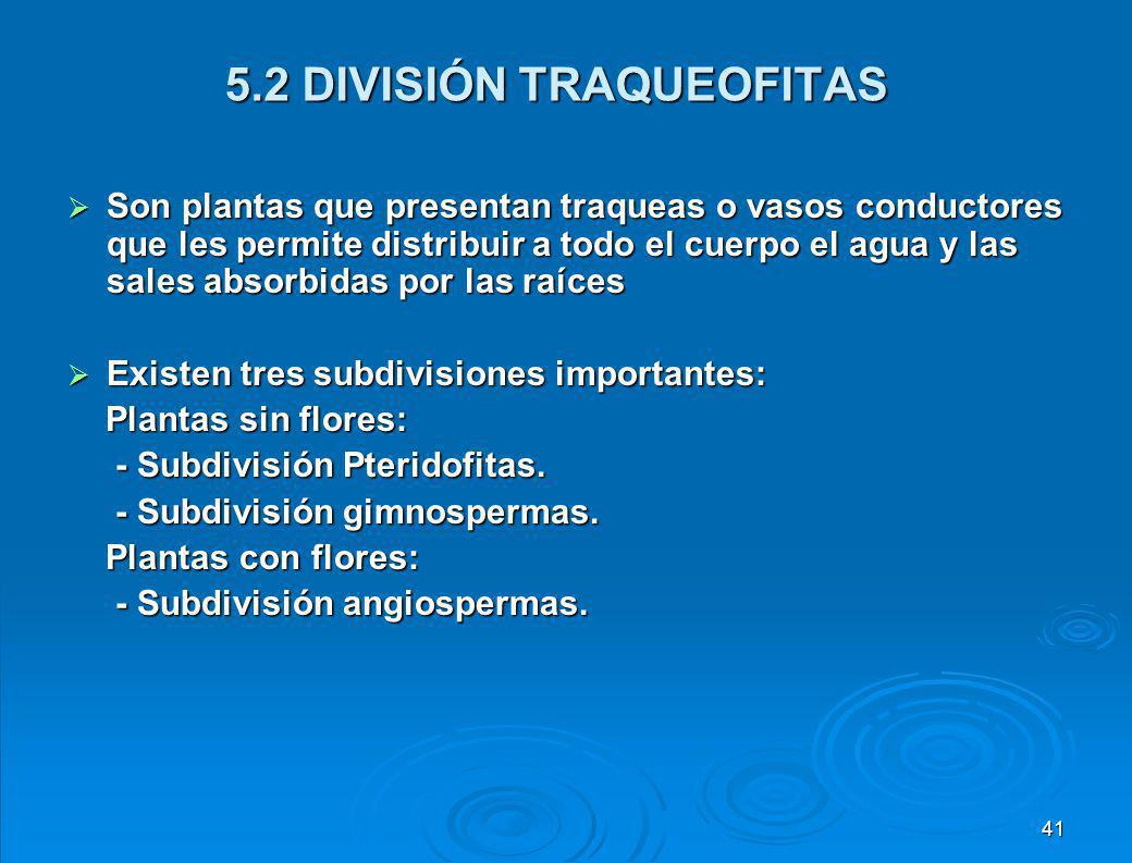 5.1 DIVISION BRIOPHYTAS (AVASCULARES) Son las plantas menos evolucionadas, incluye a los musgos y las hepáticas, carecen de flores, raíces y tallos verdaderos; por lo que no presentan vasos conductores y por ello alcanzan 20 centímetros como máximo.