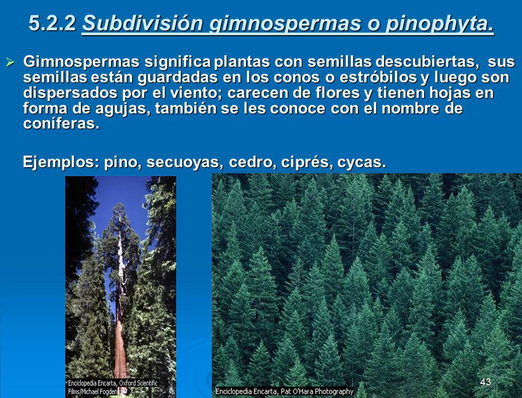 5.2.1 Subdivisión pteridofita.Son plantas vasculares sin flores ni semillas.