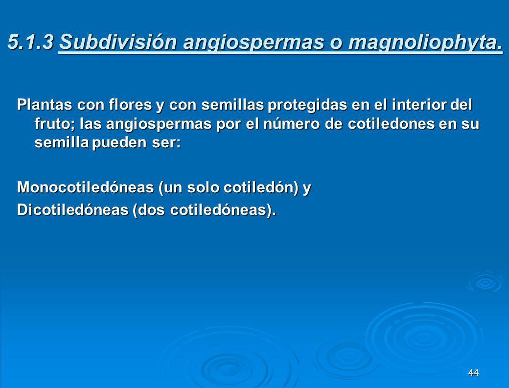 5.2.2 Subdivisión gimnospermas o pinophyta. Gimnospermas significa plantas con semillas descubiertas, sus semillas están guardadas en los conos o estr