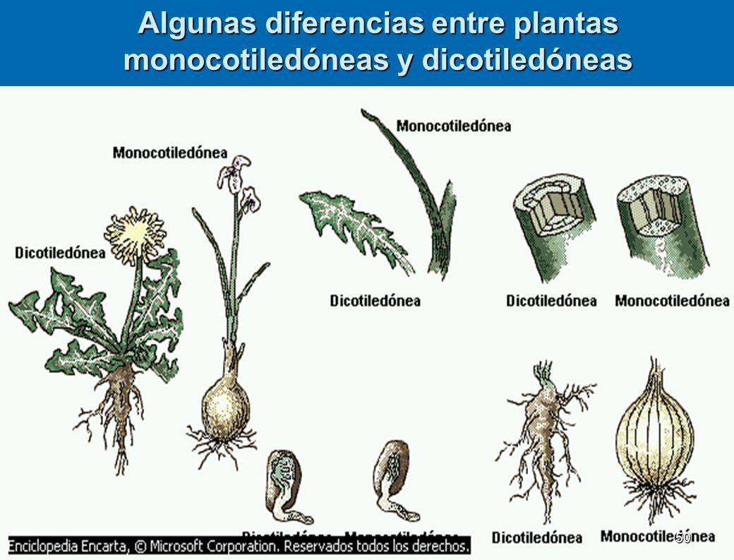 FAMILIACARACTERISTICASEJMPLOS Labiadas Flores con corola gamopétala irregular bilabiada, ovario súpero, fruto con cuatro semillas. Orégano romero, men
