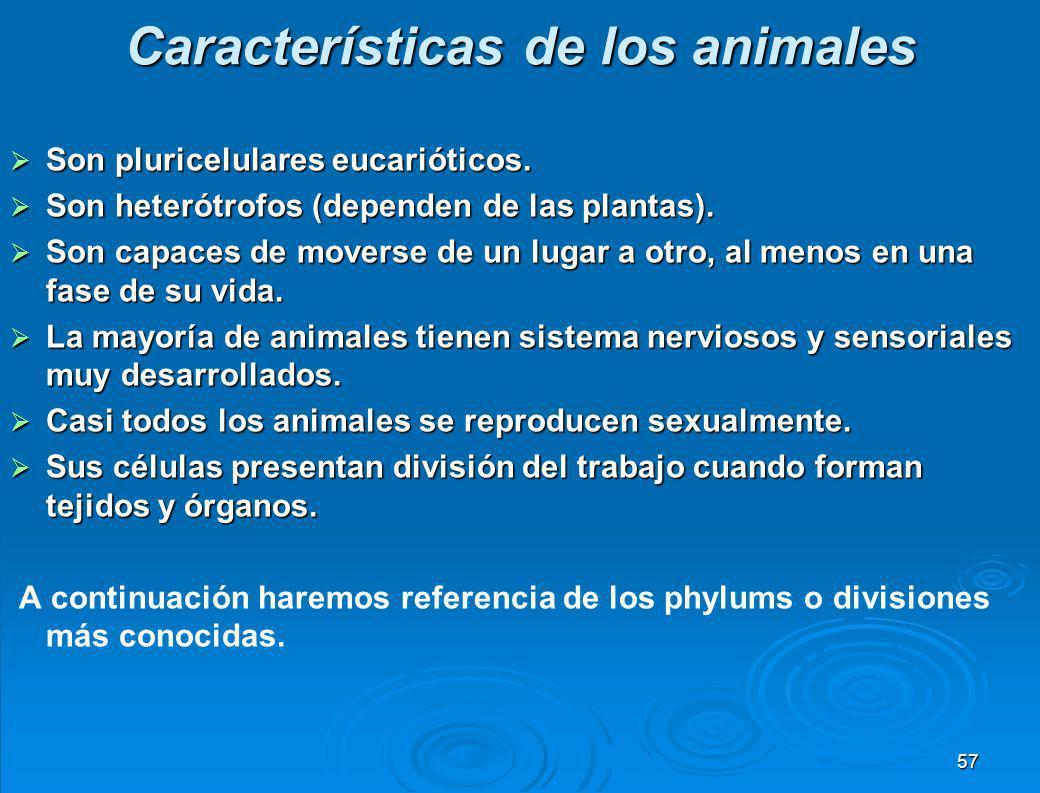 VI. REINO ANIMAL El reino Animal comprende más de dos millones de especies vivientes agrupadas en aproximadamente 35 filos o divisiones. Los vertebrad