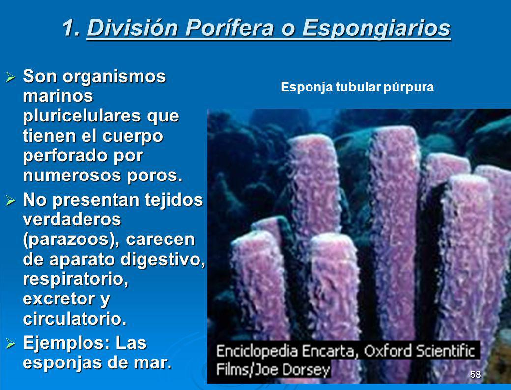 Características de los animales Son pluricelulares eucarióticos.