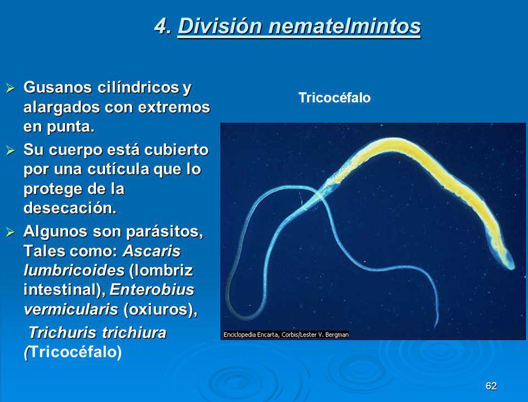 Ciclo vital de la Fasciola hepática 61