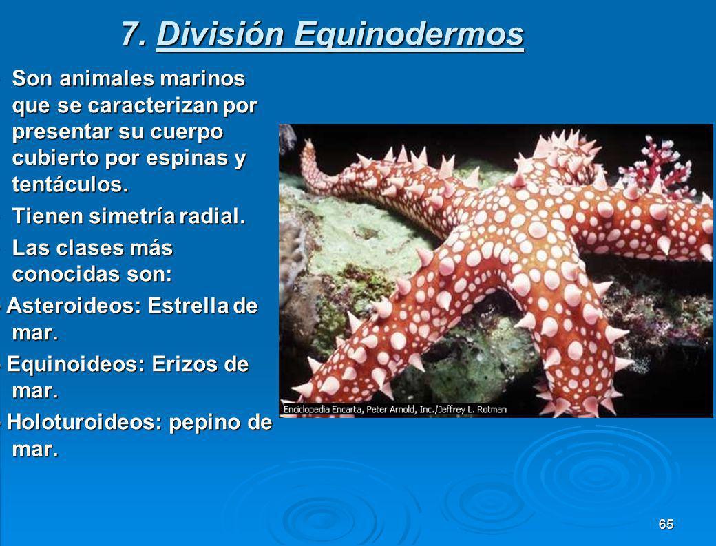 6.División Moluscos Son animales de cuerpo blando con celoma, sistema digestivo completo.