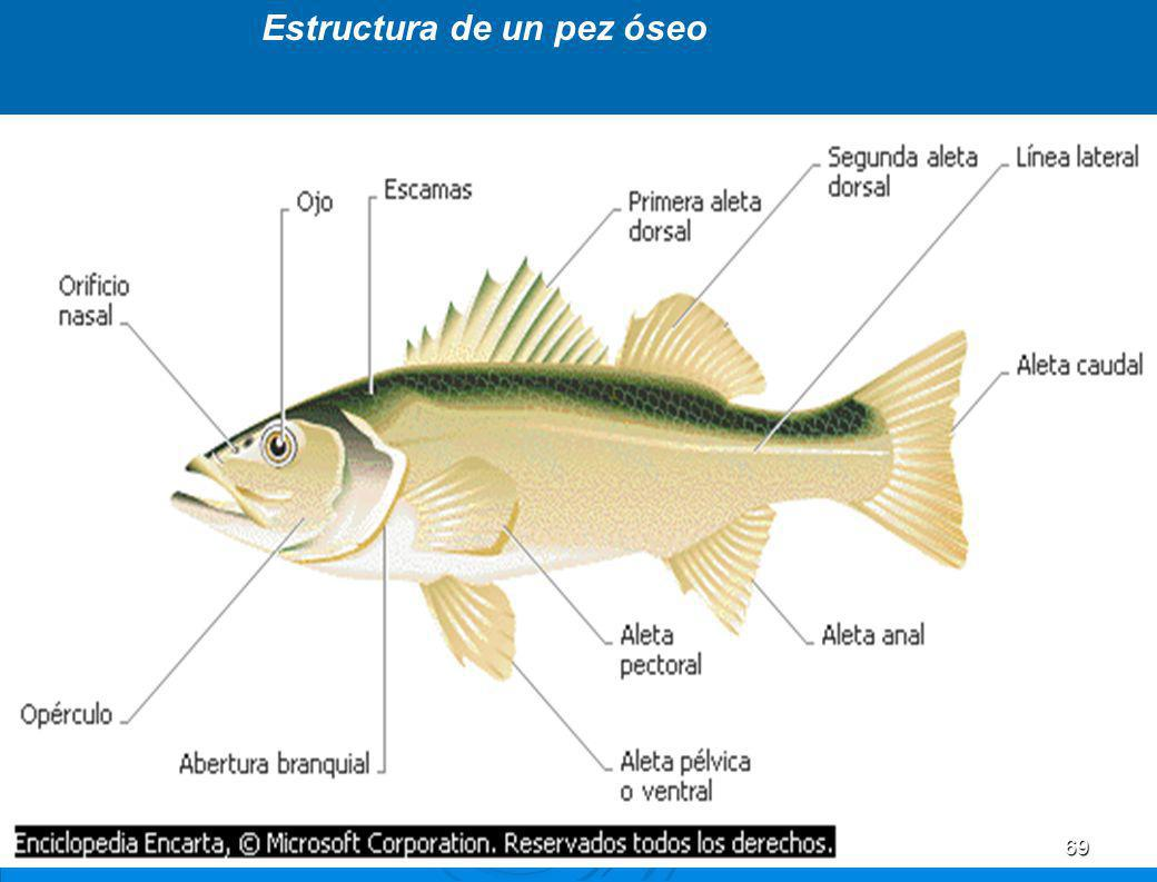 9. División Cordados Son animales superiores, celomados, con simetría bilateral. Son animales superiores, celomados, con simetría bilateral. Presentan