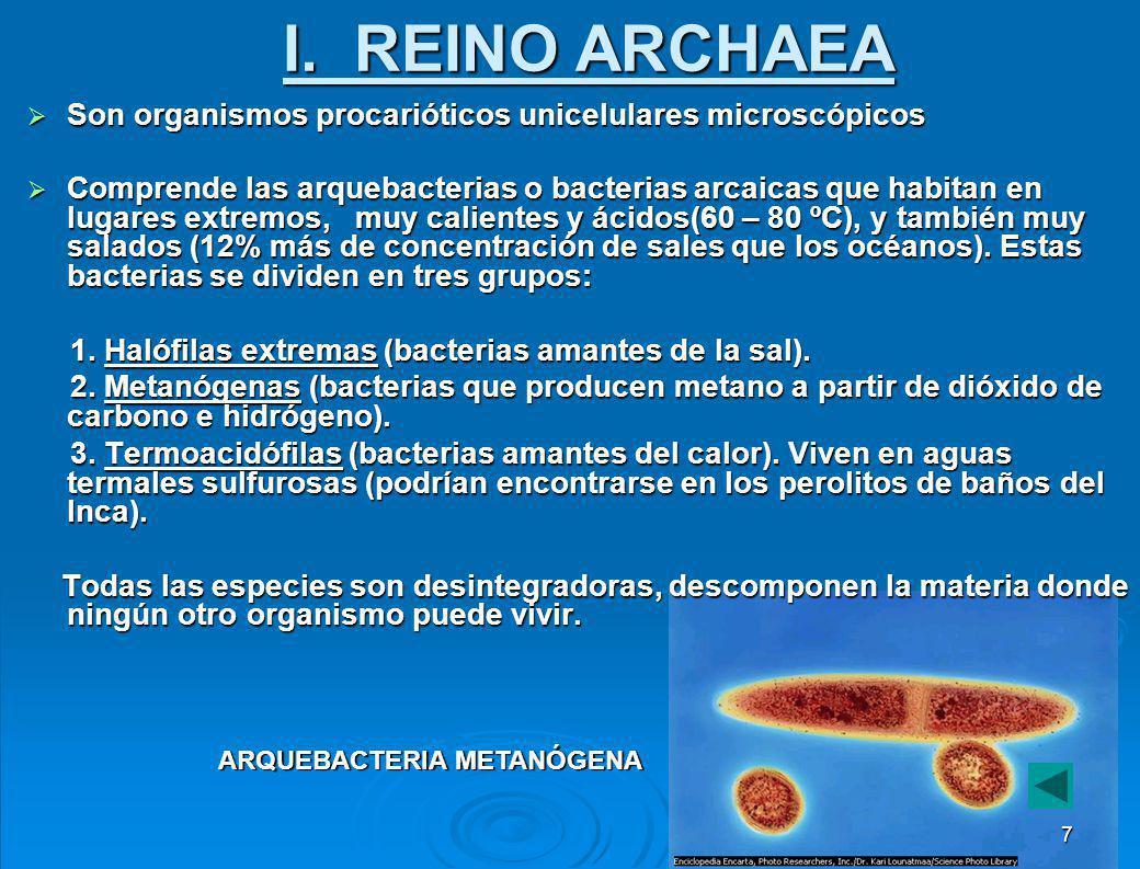 Árbol filogenético de los seres vivos 6