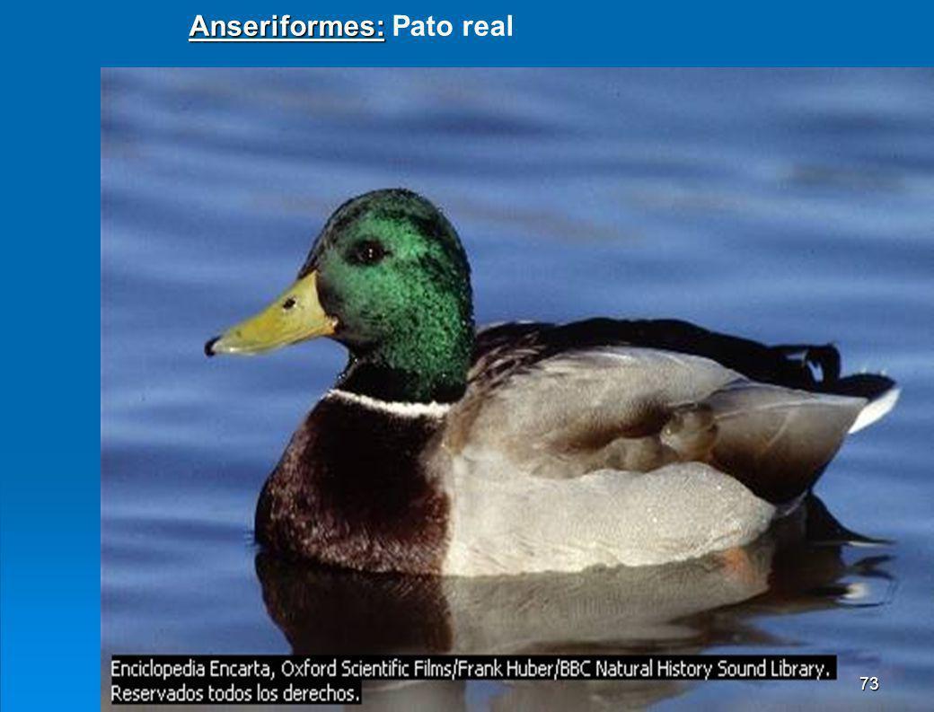 9.4 Aves. Poseen el cuerpo cubierto de plumas, la boca se ha transformado en pico. Existen unas 9000 especies, las más conocidas se agrupa en los sigu