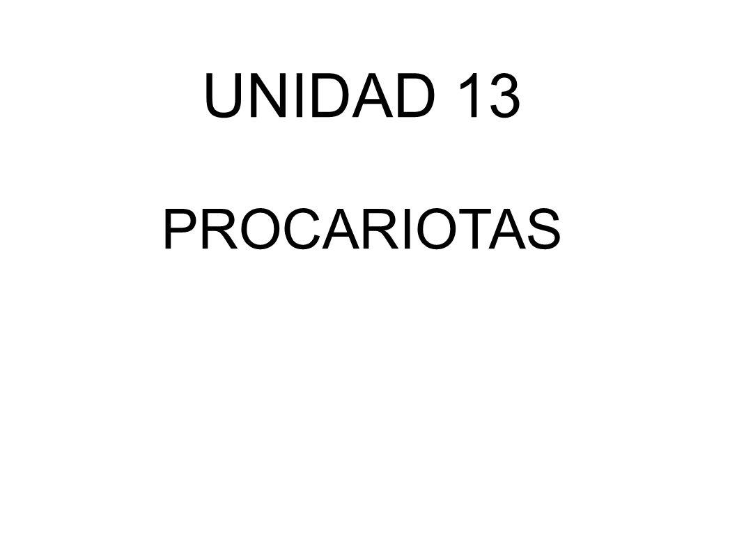 UNIDAD 13 PROCARIOTAS