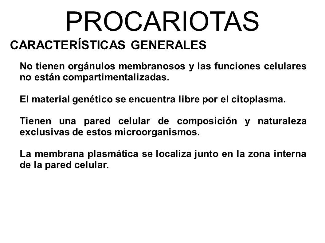 PROCARIOTAS CARACTERÍSTICAS GENERALES No tienen orgánulos membranosos y las funciones celulares no están compartimentalizadas.