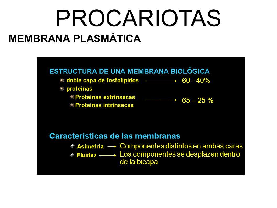 PROCARIOTAS MEMBRANA PLASMÁTICA 60 - 40% 65 – 25 % Componentes distintos en ambas caras Los componentes se desplazan dentro de la bicapa