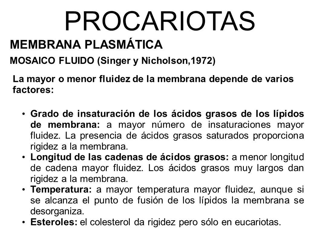 PROCARIOTAS MEMBRANA PLASMÁTICA MOSAICO FLUIDO (Singer y Nicholson,1972) Grado de insaturación de los ácidos grasos de los lípidos de membrana: a mayor número de insaturaciones mayor fluidez.
