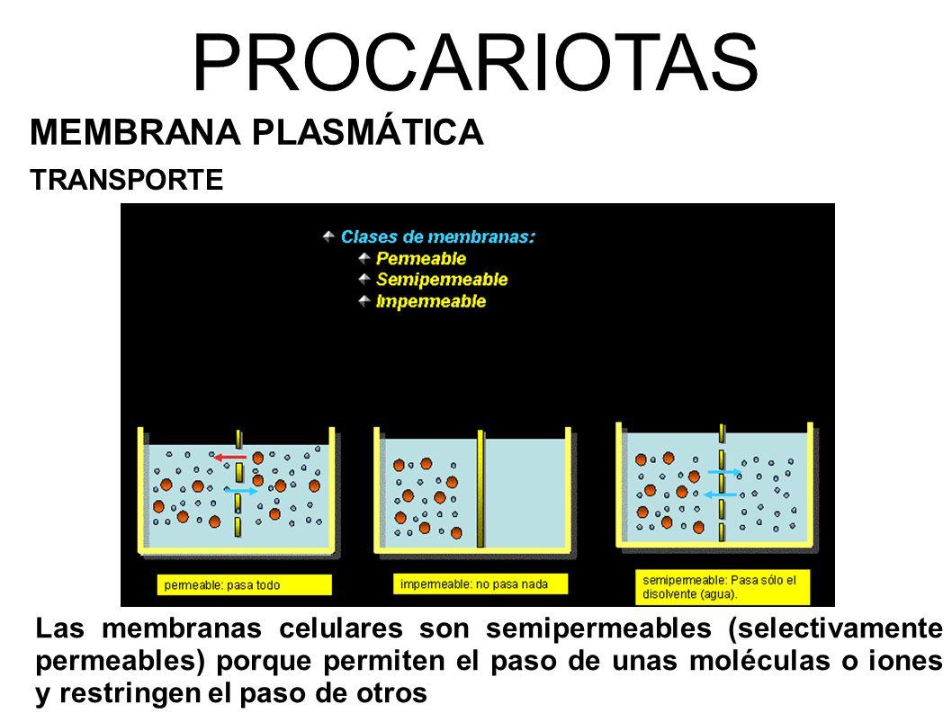 PROCARIOTAS MEMBRANA PLASMÁTICA TRANSPORTE Las membranas celulares son semipermeables (selectivamente permeables) porque permiten el paso de unas moléculas o iones y restringen el paso de otros