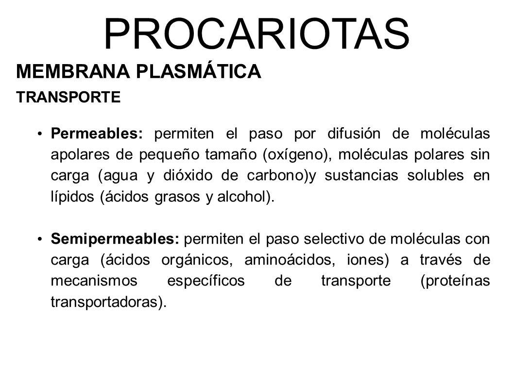 PROCARIOTAS MEMBRANA PLASMÁTICA TRANSPORTE Permeables: permiten el paso por difusión de moléculas apolares de pequeño tamaño (oxígeno), moléculas polares sin carga (agua y dióxido de carbono)y sustancias solubles en lípidos (ácidos grasos y alcohol).