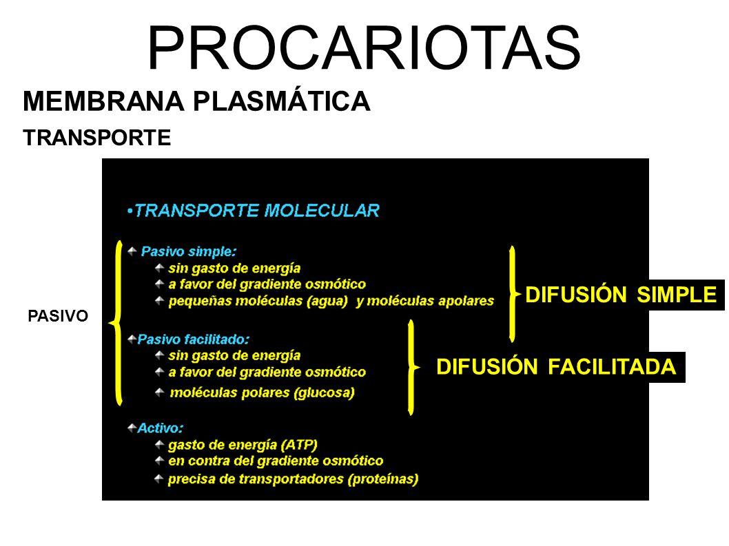 PROCARIOTAS MEMBRANA PLASMÁTICA TRANSPORTE PASIVO DIFUSIÓN SIMPLE DIFUSIÓN FACILITADA