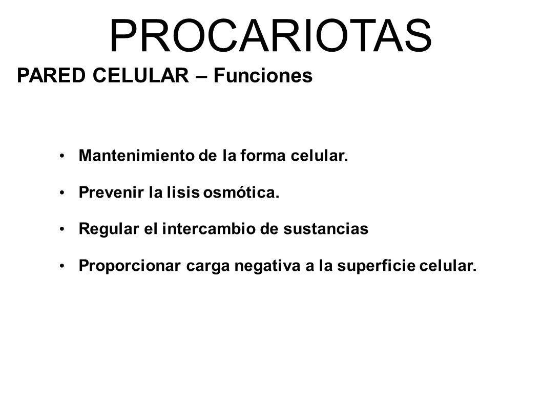 PROCARIOTAS PARED CELULAR – Funciones Mantenimiento de la forma celular.