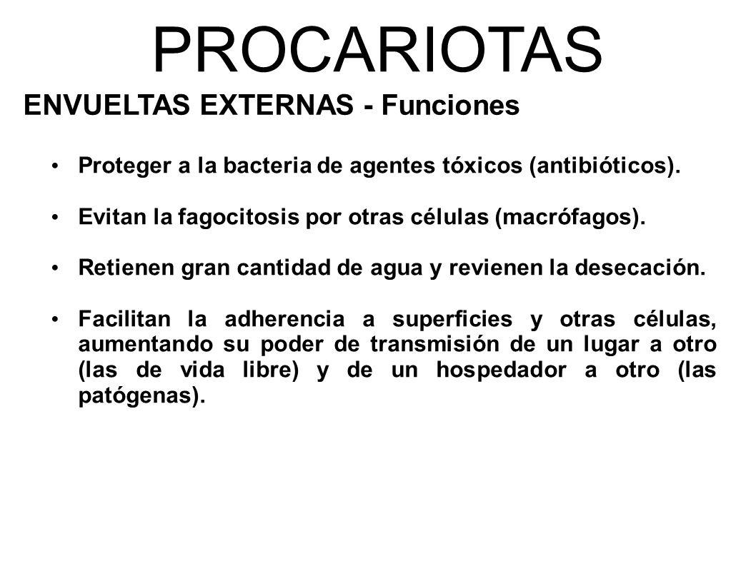 PROCARIOTAS ENVUELTAS EXTERNAS - Funciones Proteger a la bacteria de agentes tóxicos (antibióticos).