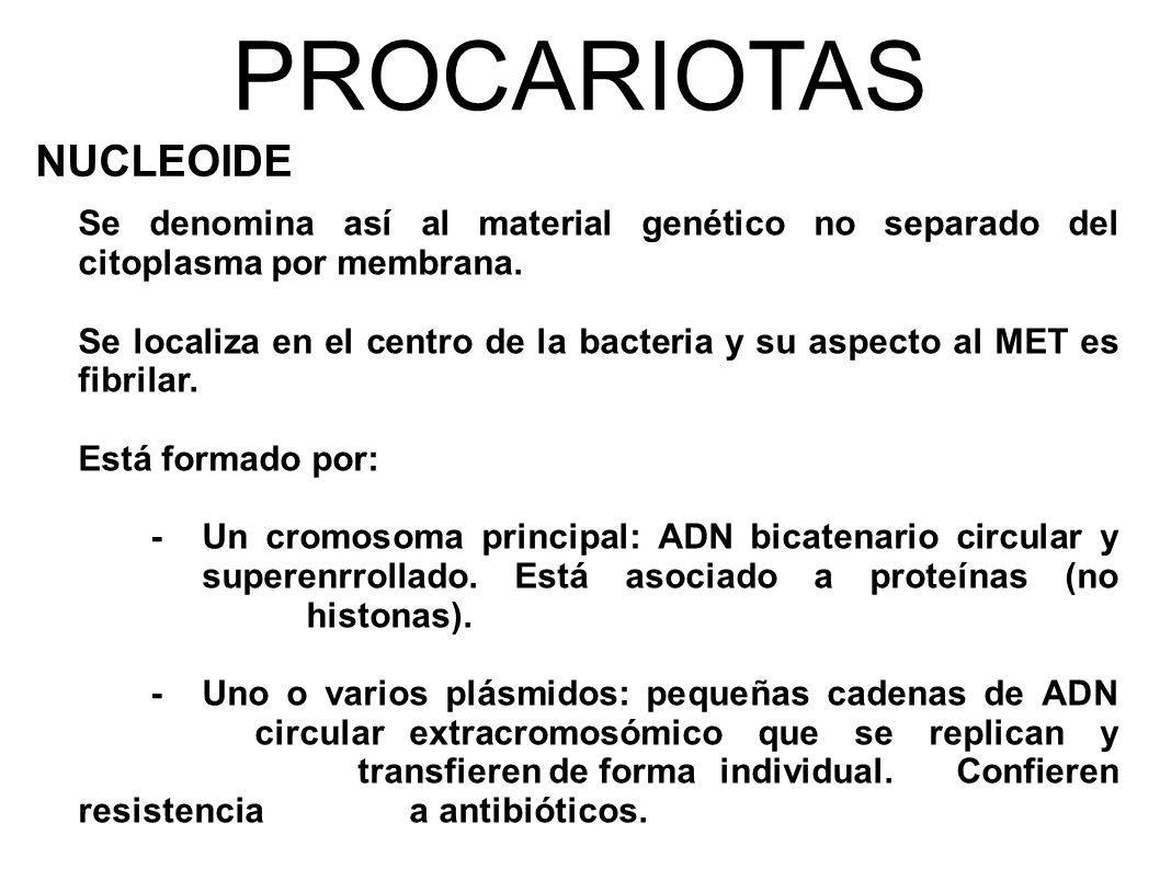 PROCARIOTAS NUCLEOIDE Se denomina así al material genético no separado del citoplasma por membrana.
