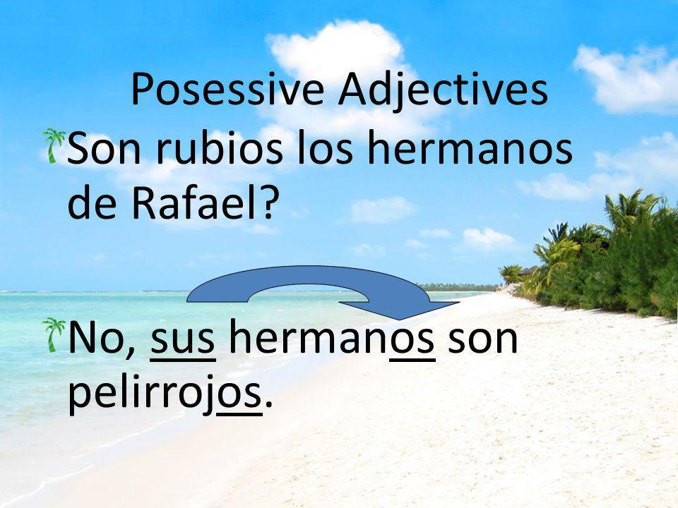 Posessive Adjectives Son rubios los hermanos de Rafael No, sus hermanos son pelirrojos.