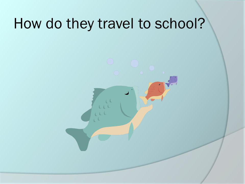 How do they travel to school?