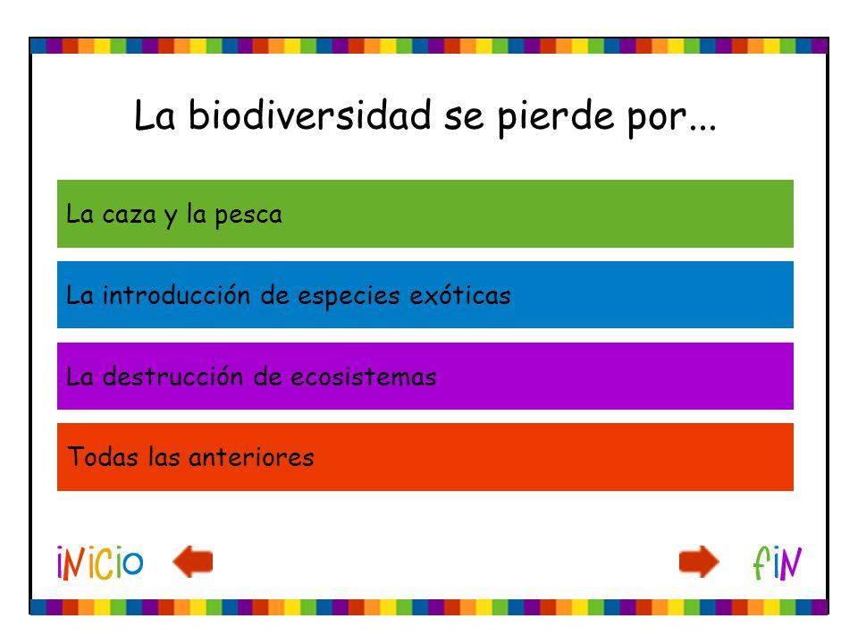La biodiversidad se pierde por... La caza y la pesca La introducción de especies exóticas La destrucción de ecosistemas Todas las anteriores