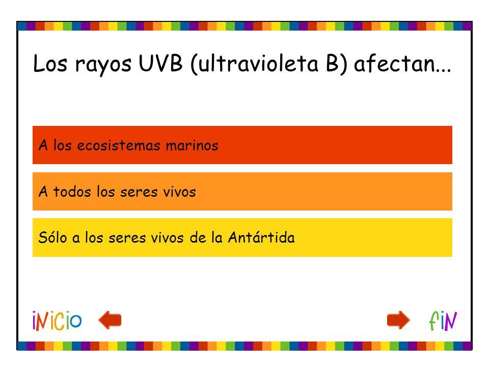 Los rayos UVB (ultravioleta B) afectan... A los ecosistemas marinos A todos los seres vivos Sólo a los seres vivos de la Antártida