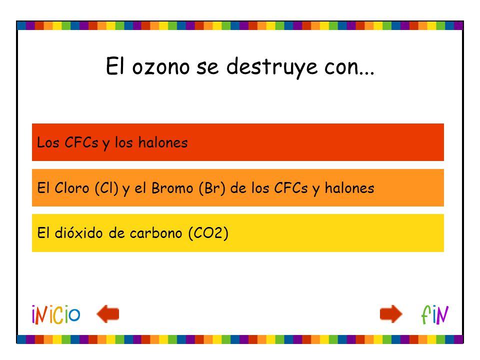 El ozono se destruye con... Los CFCs y los halones El Cloro (Cl) y el Bromo (Br) de los CFCs y halones El dióxido de carbono (CO2)