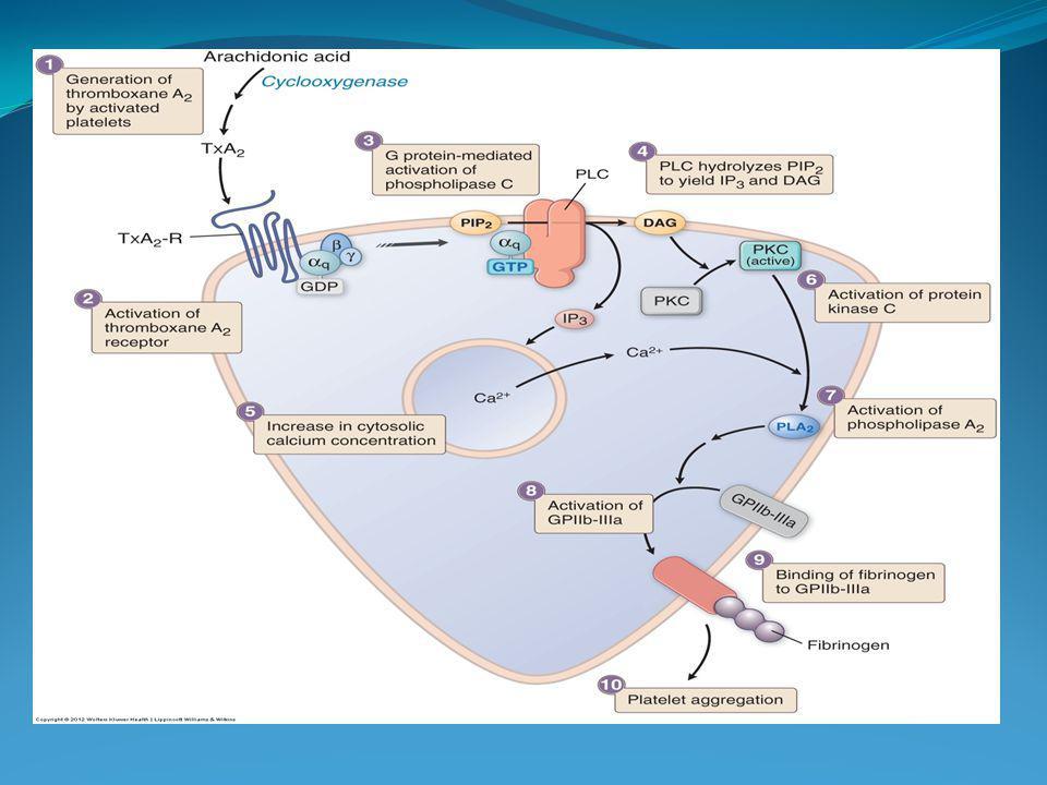 CLOPIDOGREL Antagonista irreversible receptores ADP Usos: SCA Prevención 2ª SCA si hay contraindicación ASA Prevención 2ª ACV isquémico E V P RAMs.