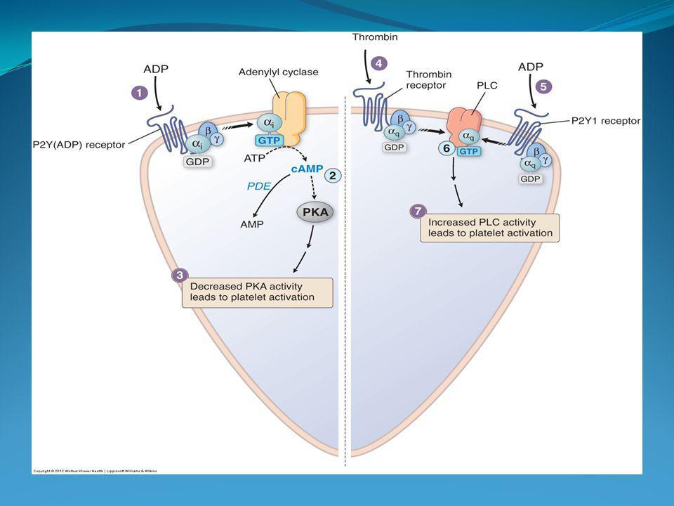 INHIBIDORES GpIIb IIIa Abciximab, eptifibatida, tirofiban Antagonistas reversibles Evitan unión con fibrinógeno SCA ICP; SCASET isquemia persistente RAMs: hemorragia, trombocitopenia