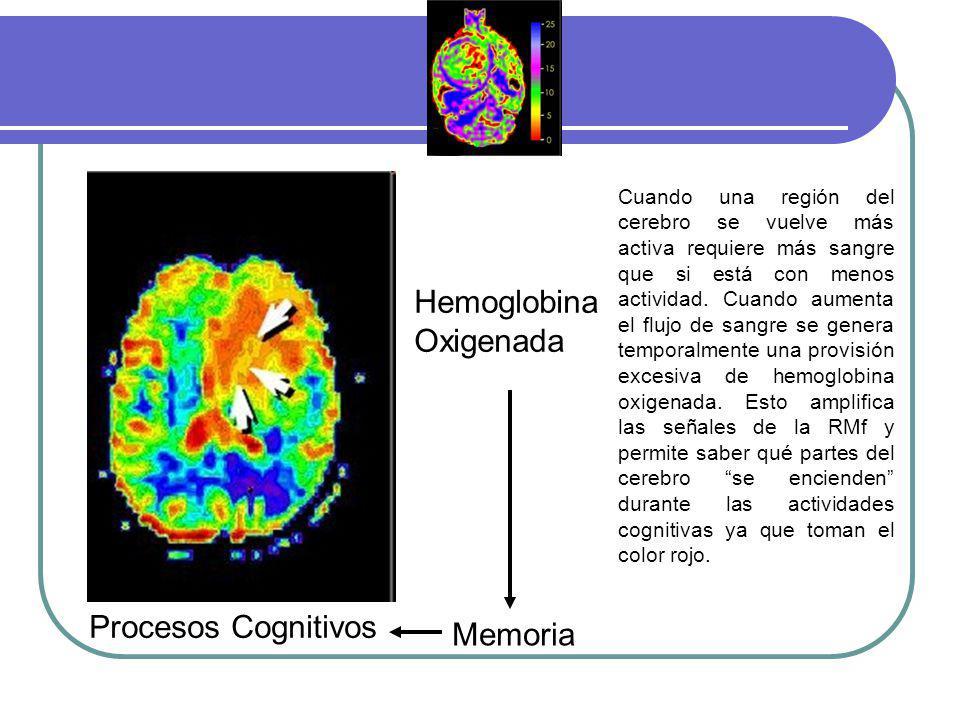 Hemoglobina Oxigenada Memoria Procesos Cognitivos Cuando una región del cerebro se vuelve más activa requiere más sangre que si está con menos activid