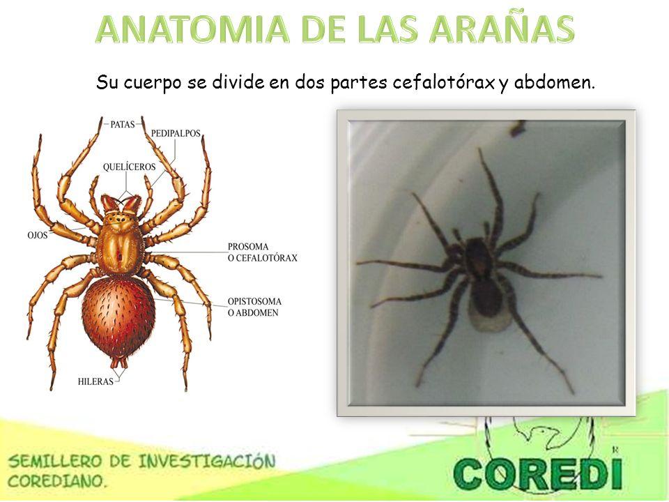 Excepcional Saltando La Anatomía De La Araña Fotos - Imágenes de ...