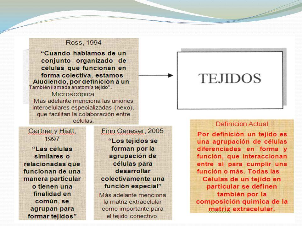 Famoso Definición De Tejido En La Anatomía Bosquejo - Anatomía de ...